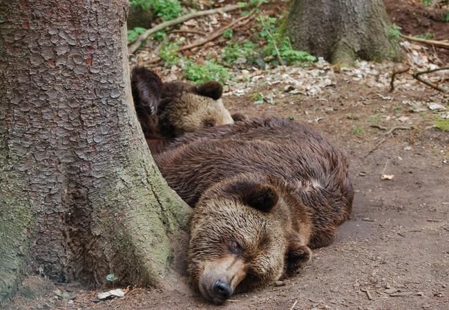 Lothar und Sindi entspannen im Wald