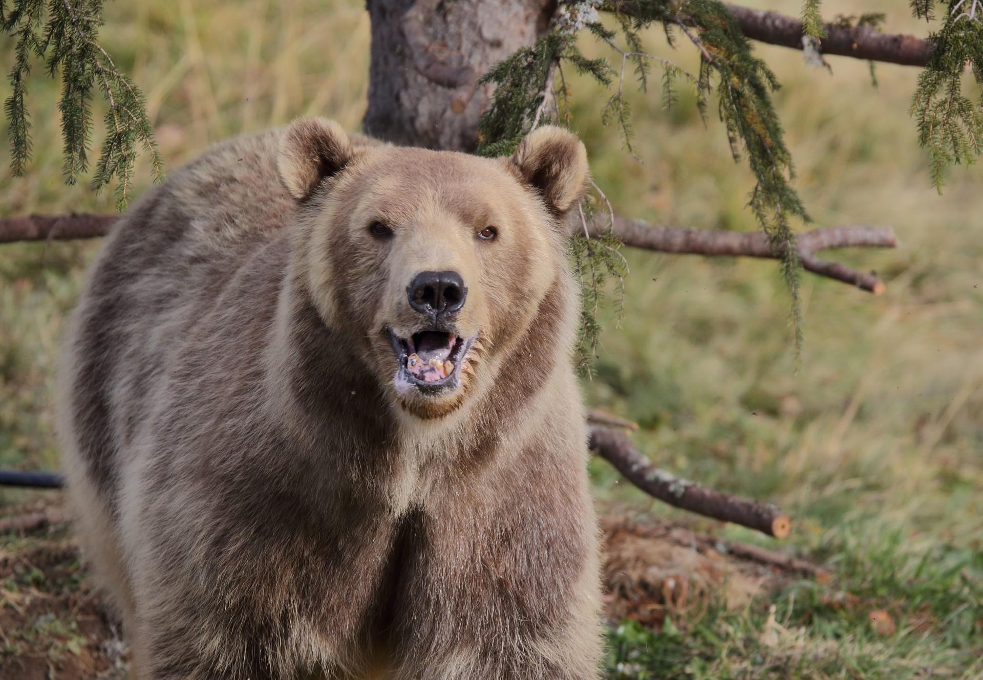 Parrainage Arosa terre des ours