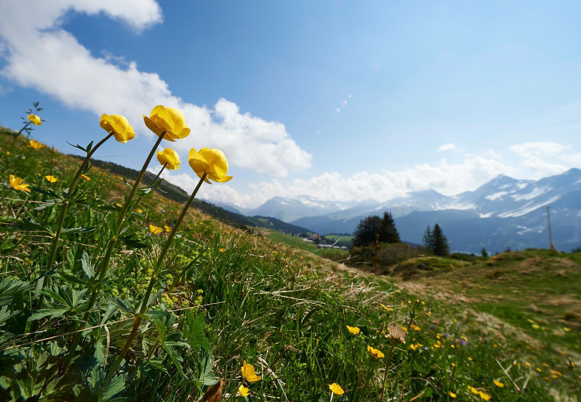 Ausblick Arosa Berge