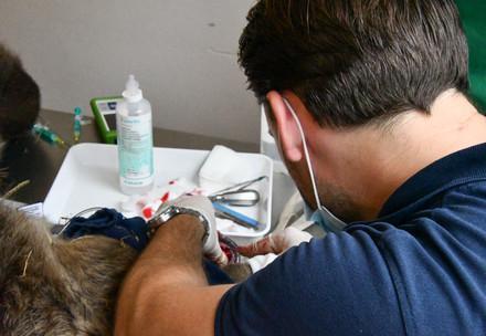 Tierarzt-Besuch