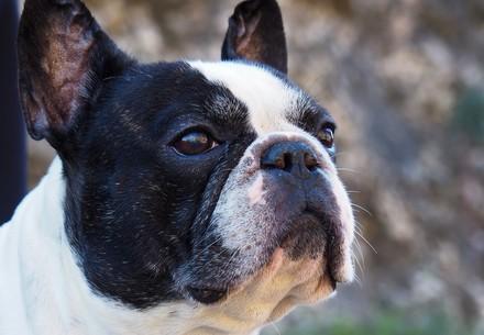 Bandana pour chien QUATRE PATTES