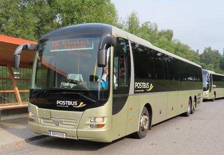 Mit dem Bus in den Bärenwald