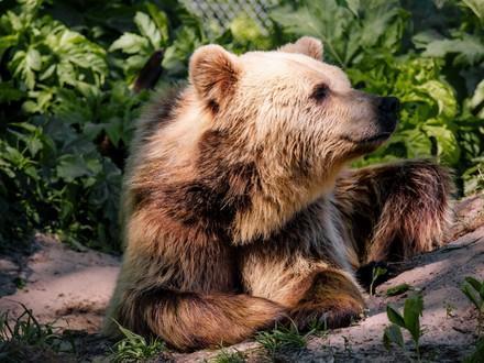 Bear in the sunshine