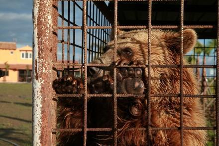 Brown bears kept in private keeping in Southeast Europe
