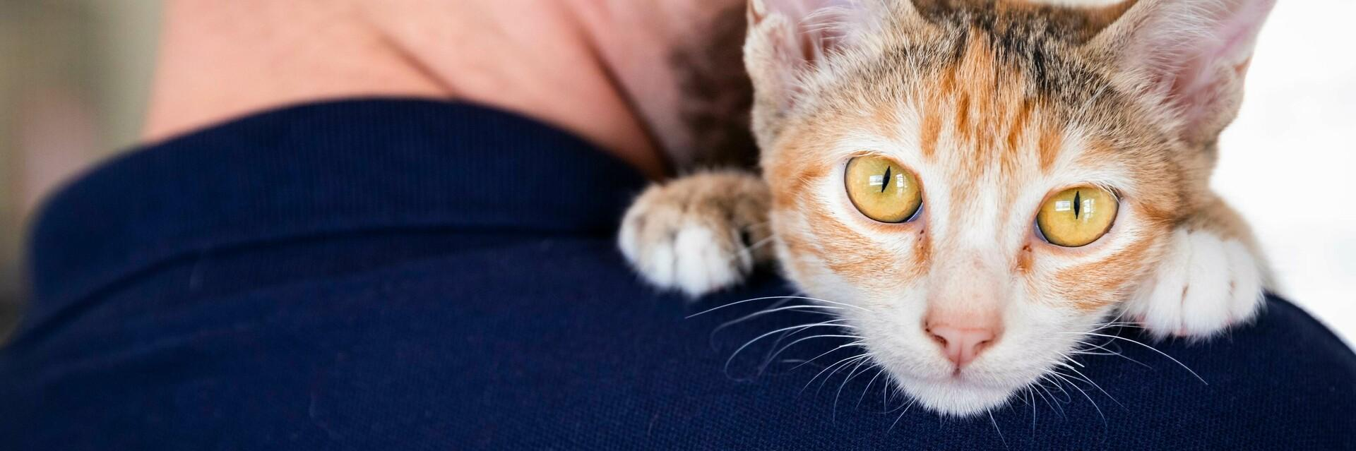 Katze und ihr Halter