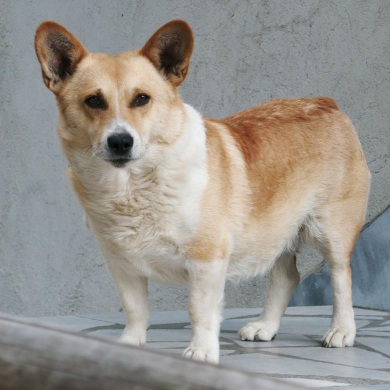 Sieben-Sekunden-Regel für sanfte Hundepfoten.