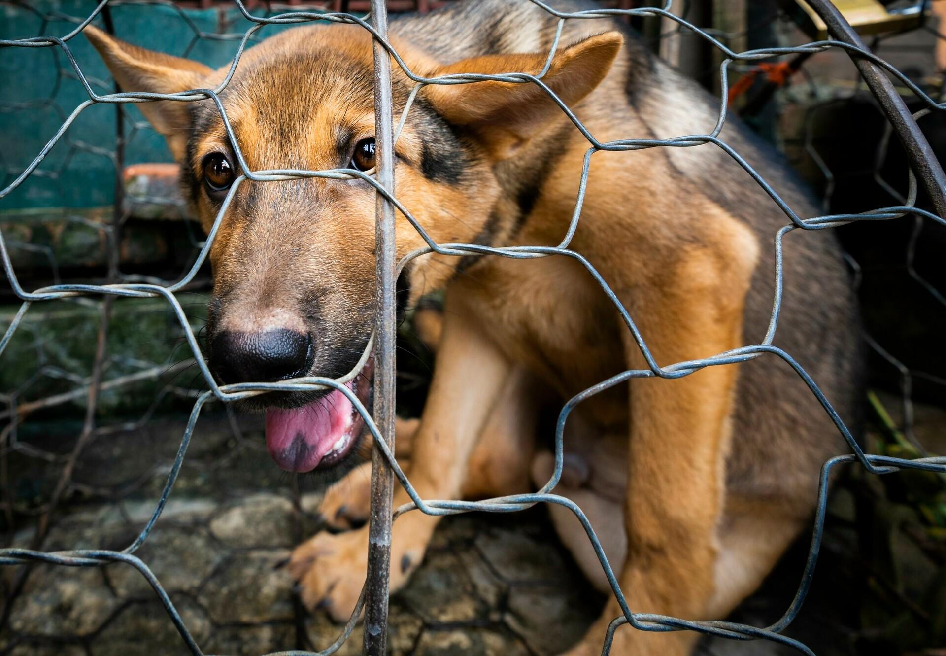 Hund im Käfig