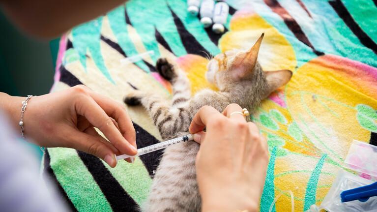 Geef een vaccinatie aan een gered dier