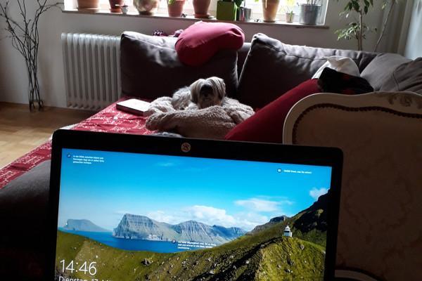 Hund sitzt auf der Couch
