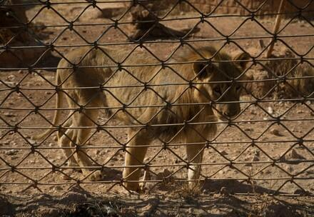 Press Releases - Our Stories - FOUR PAWS South Africa