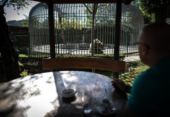 un ours en captivité