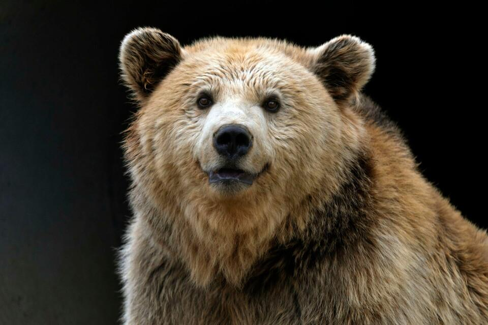 Bear Kassandra