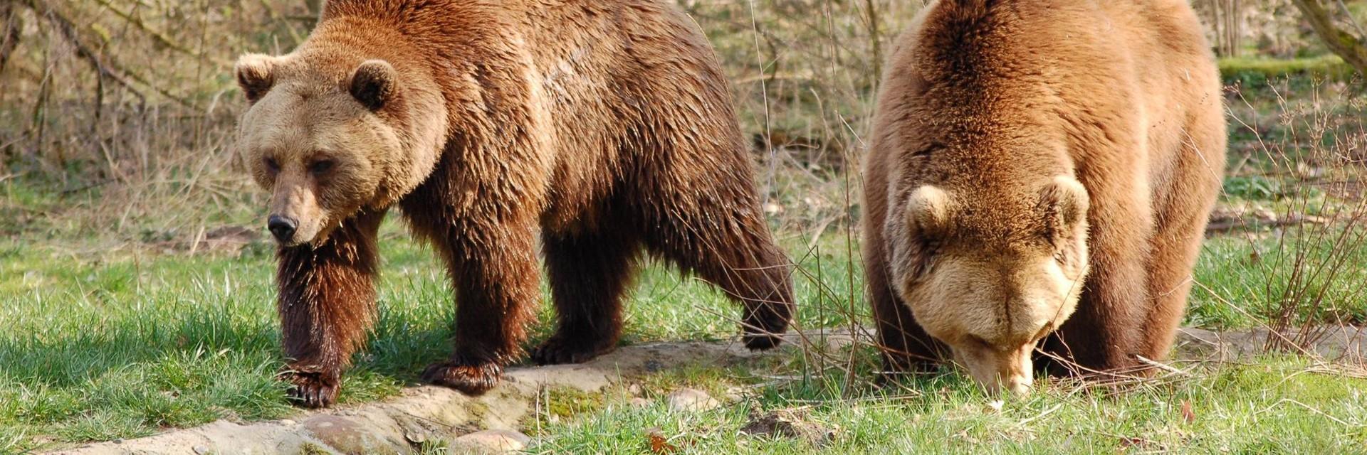 Bären Ben und Felix im BÄRENWALD Müritz