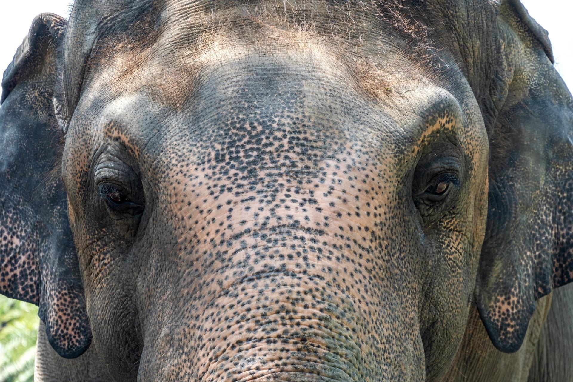 Animal Charity - Ekephant