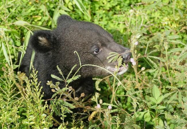Bärenbaby Mochi im hohen Gras
