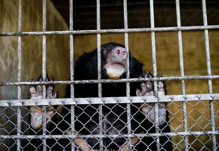Bear behind bars in bile farm