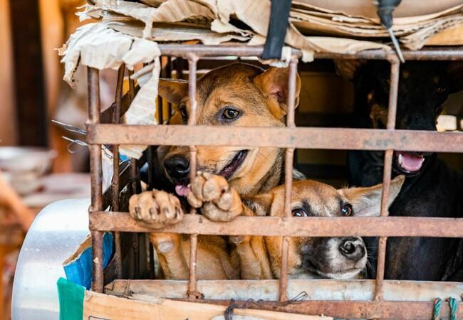 Hunde eingepfercht in einen kleinen Käfig