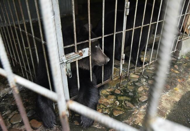 Frol und Frosia hinter Gittern
