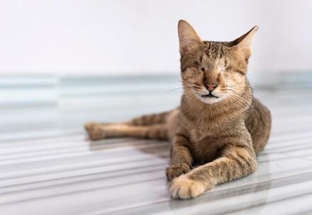 Katze Mina in Kambodscha