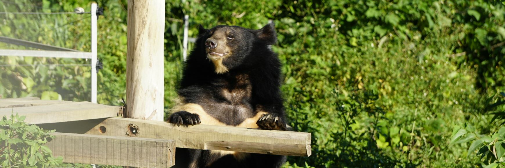 Happy bile bear