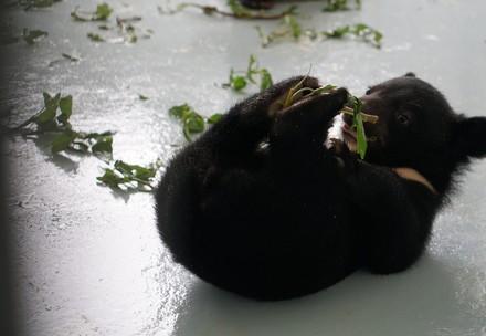 Bear Tam