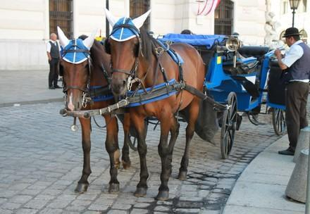 Fiaker Pferde in Wien