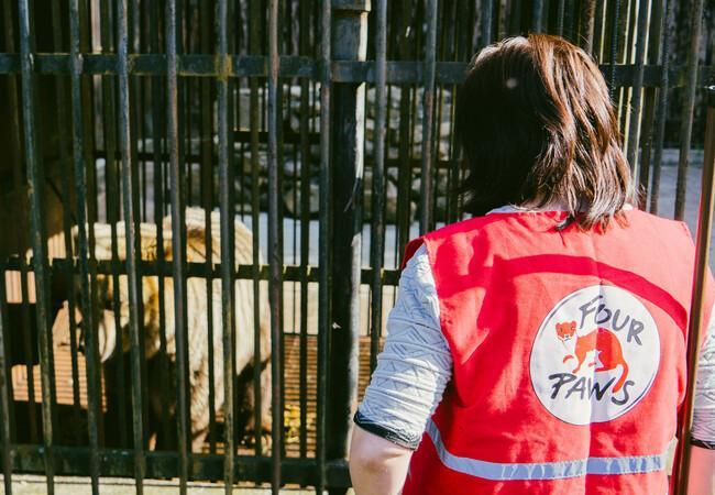 Das VIER PFOTEN Team holt die Bären aus den Käfigen raus