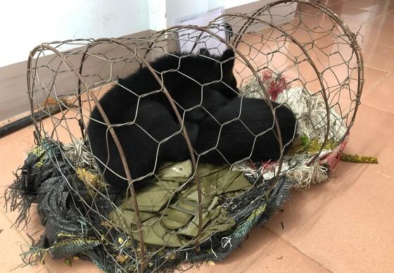 QUATRE PATTES sauve deux oursons du commerce illégal d'animaux sauvages au Vietnam