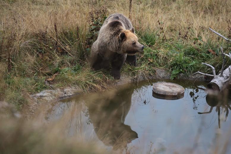 Meimo geht baden in Arosa