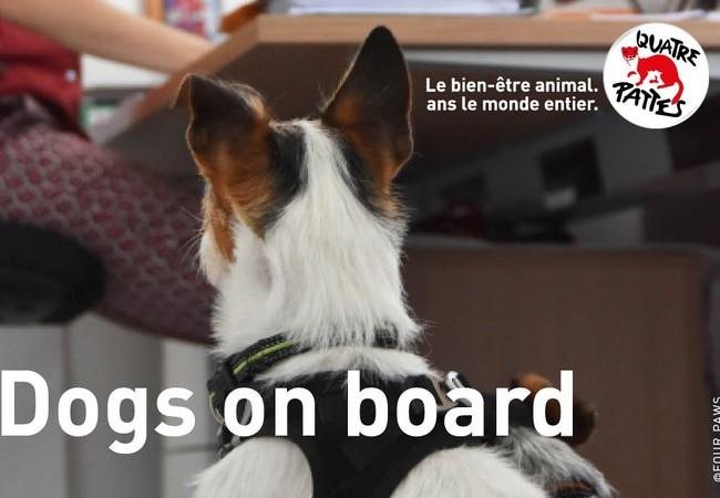 Dogs on board