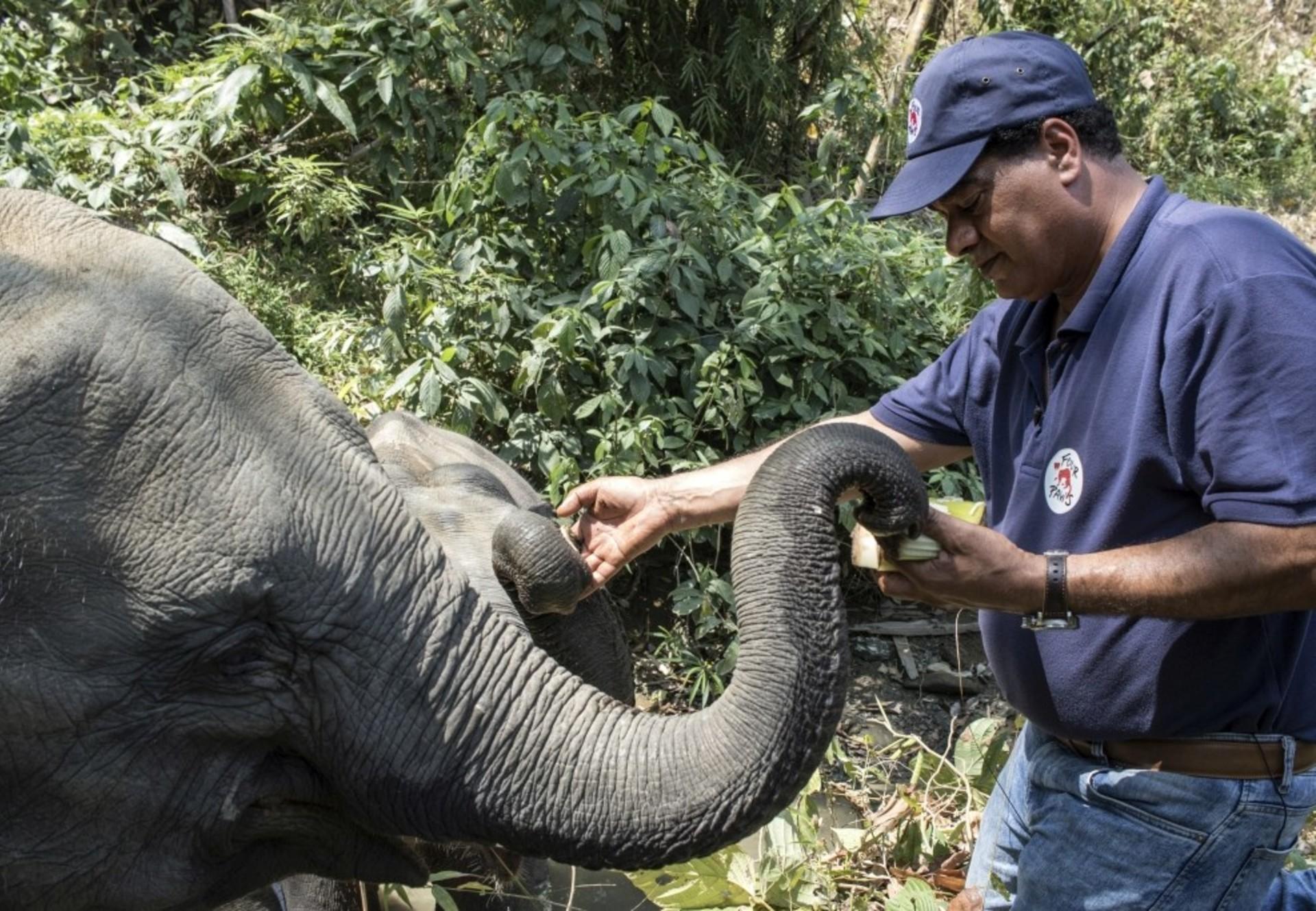Un éléphant et le Dr Amir Khalil, vétérinaire de QUATRE PATTES