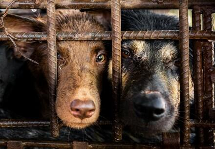 Dogs in a slaughterhouse
