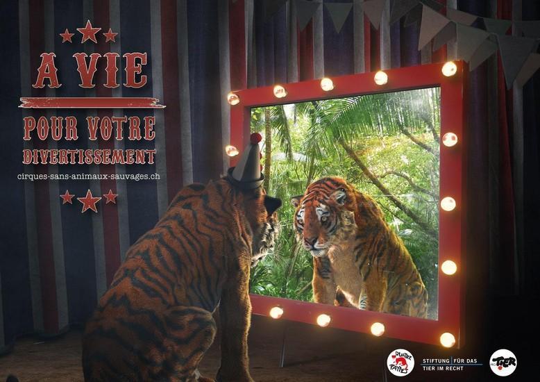 Les animaux sauvages dans les cirques