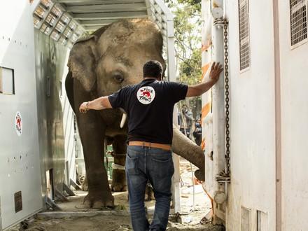 Rescue of elephant Kaavan
