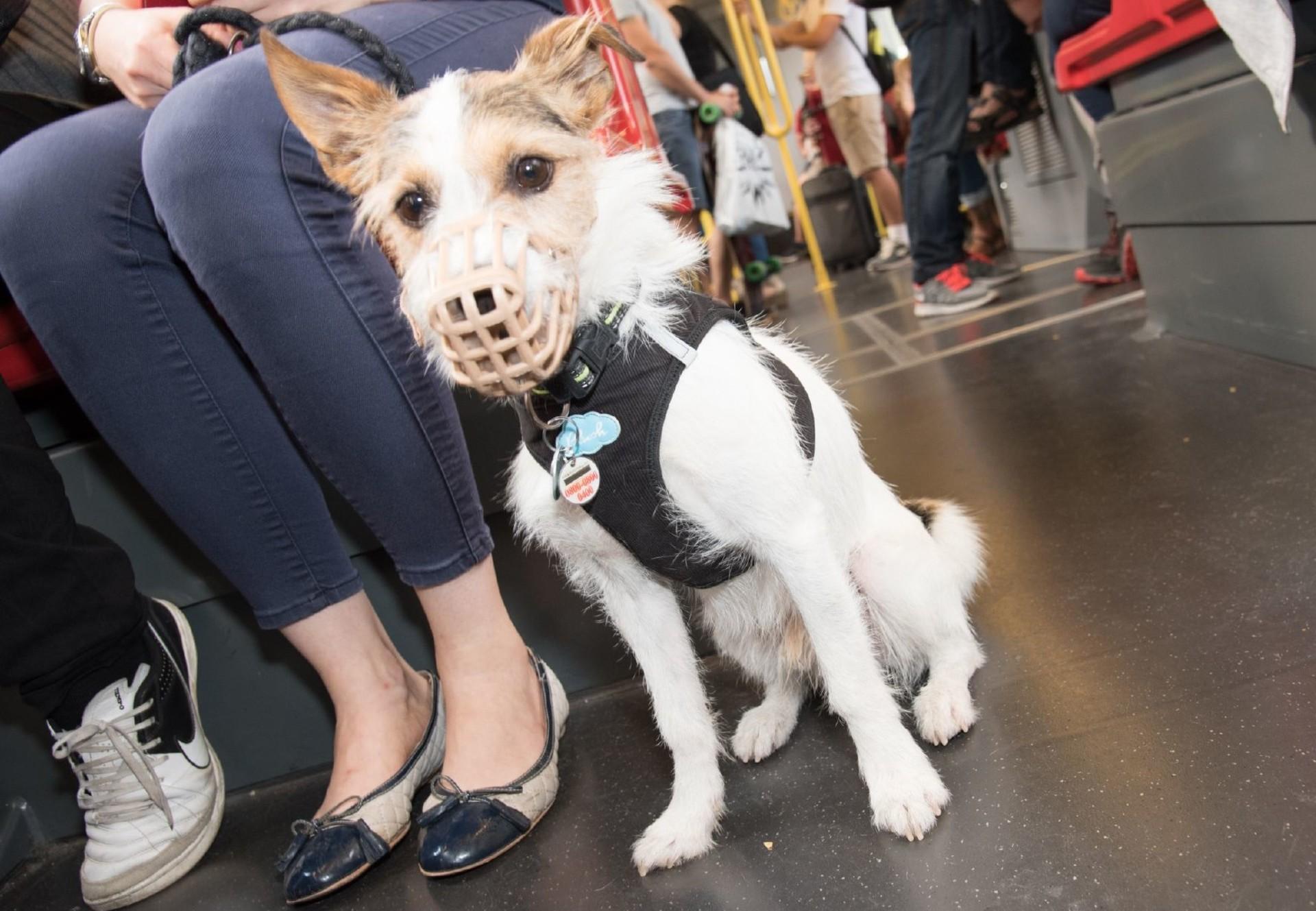 Hund mit Beißkorb in der U-Bahn