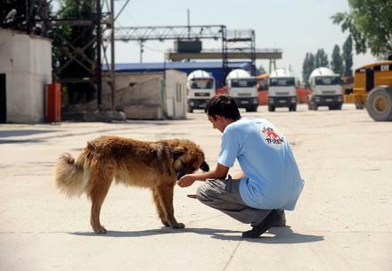 VIER PFOTEN Mitarbeiter betreut einen Streunerhund in Rumänien