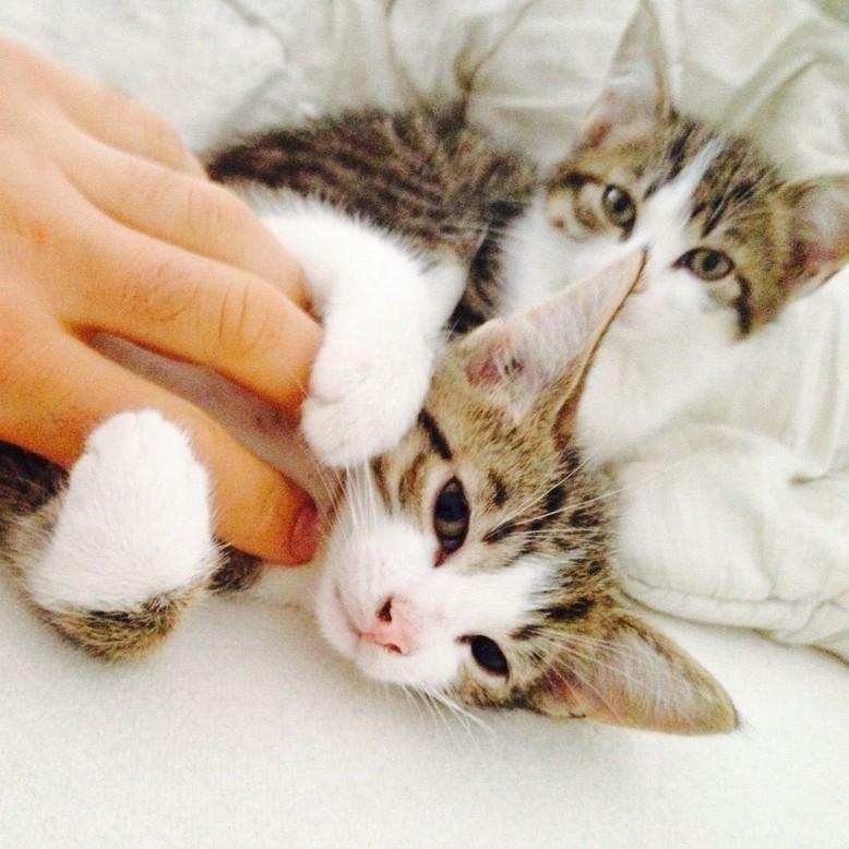 Babykatzen beim Kuscheln