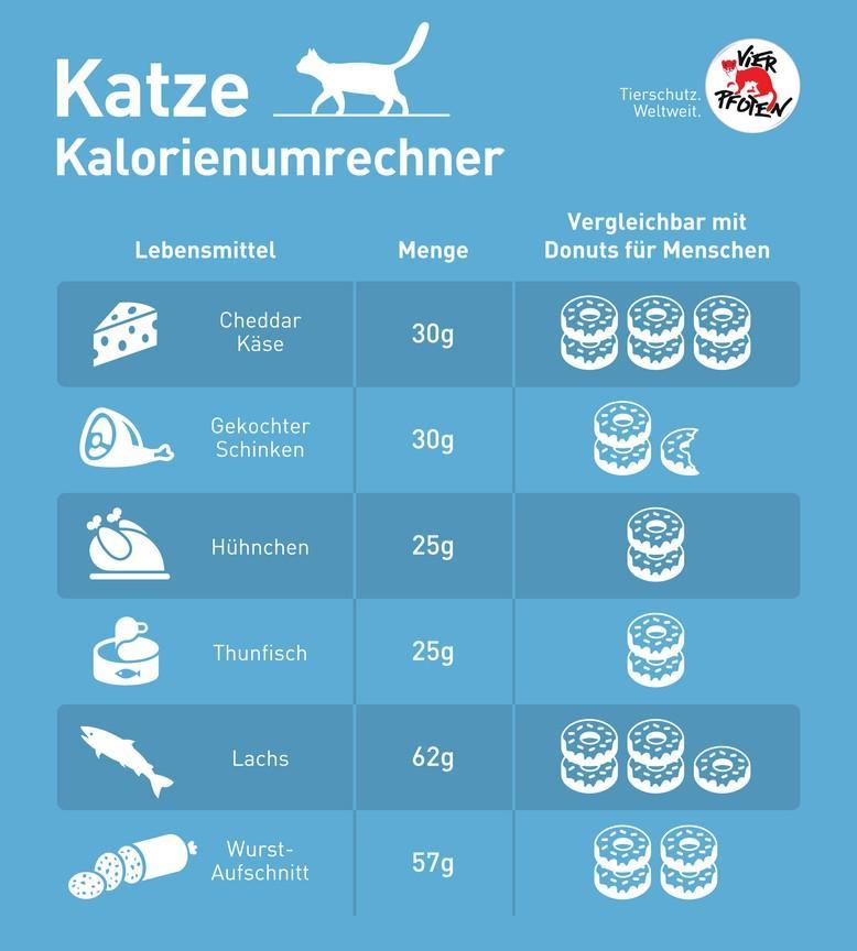 Cat calorie converter infographic