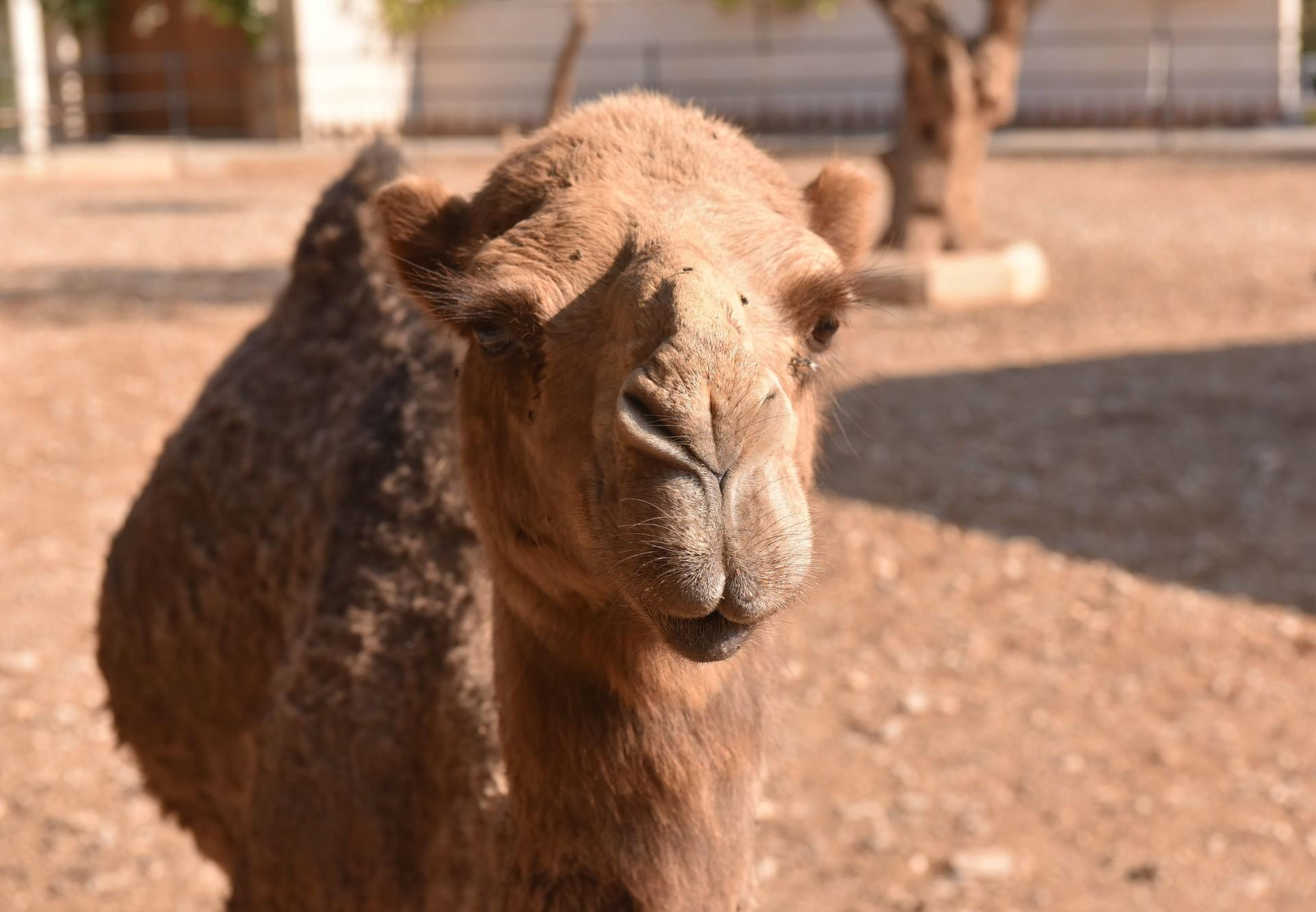 Four Paws Takes Care Of Neglected Zoo Animals In Lebanon Press Releases Our Stories Four Paws International
