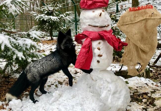 Mika hat Spaß mit dem Schneemann