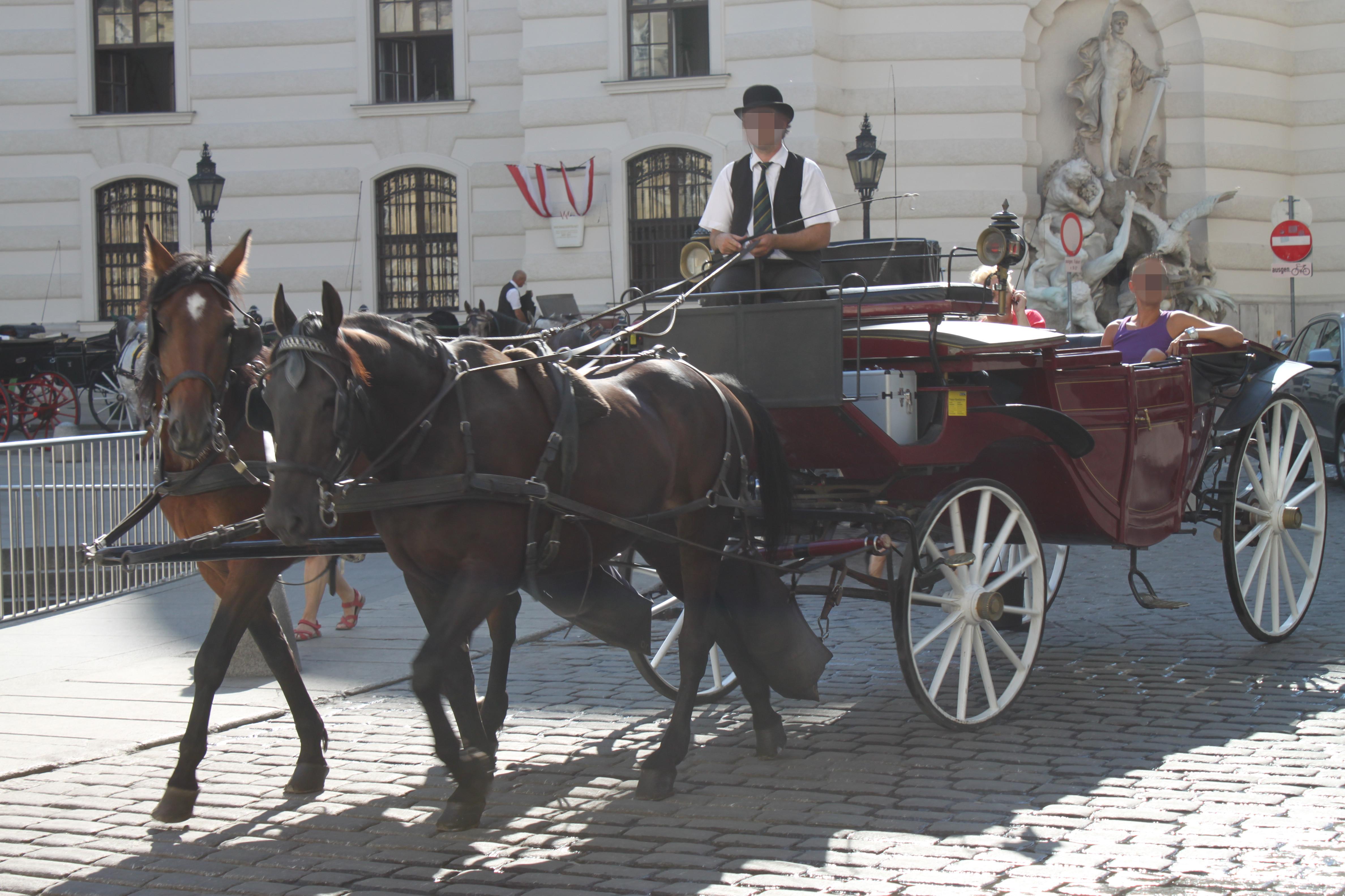Fiakerpferde in Wiens Innenstadt