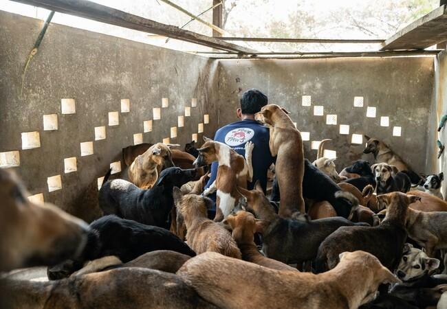 dankbare Hunde mit Mitarbeiter