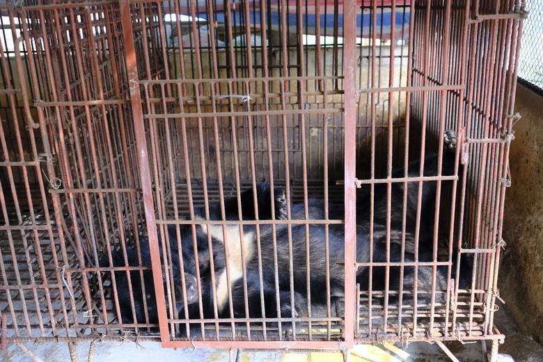 In winzige Käfige gepfercht und nun endlich gerettet
