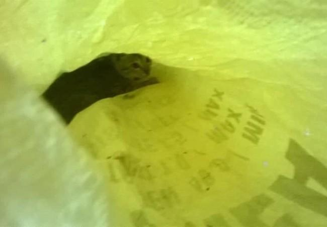 Inside the hot plastic bag