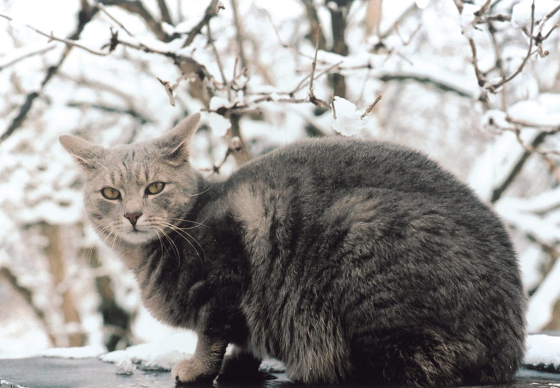 Gray stray-cat on little roof with snow