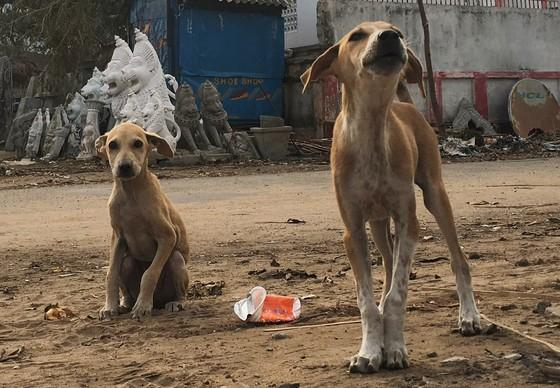 Dogs in India