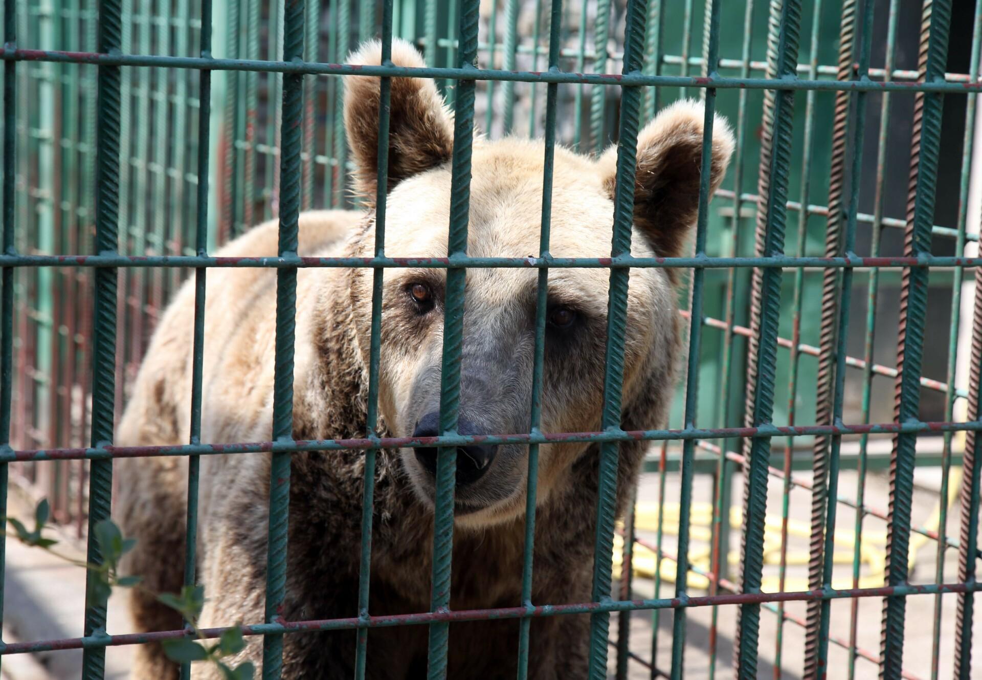Bruno im Käfig vor seiner Rettung (c) VIER PFOTEN | Christiane Flechtner