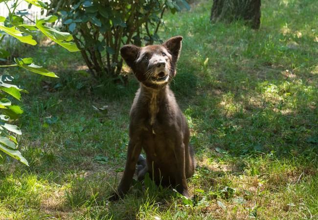 Obwohl sie ihre Beine nicht benutzen kann, liebt es Hündin Mica, in der Sonne in Speranta zu sitzen
