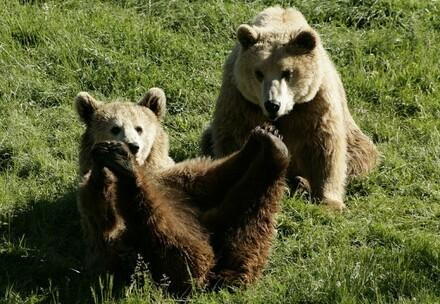 Happy rescued bears in FOUR PAWS sanctuary