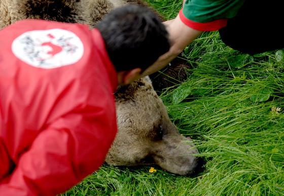 Tierschutzorganisation VIER PFOTEN